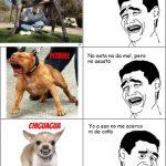 El perro más fiero