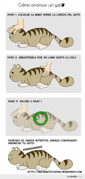 Cómo arrancar un gato