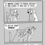 De gato a perro