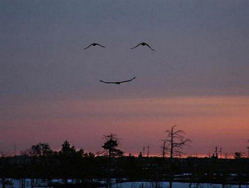 Cosas que parecen caras - Sonrisa de pájaros