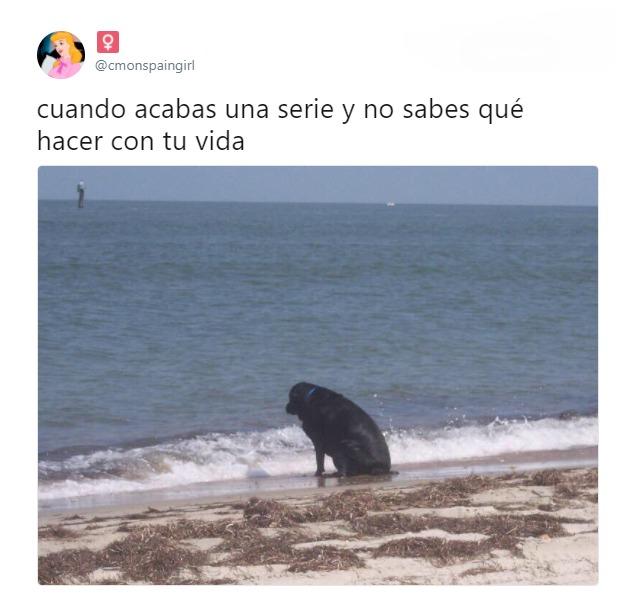 cuando acabas una serie y no sabes que hacer con tu vida perro mirando al mar