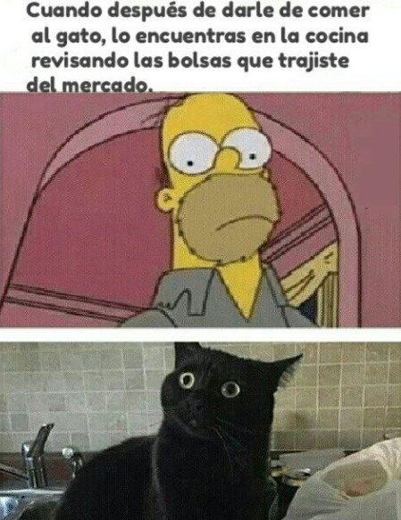 cuando despues de darle de comer al gato lo encuentras en la cocina revisando las bolsas del super