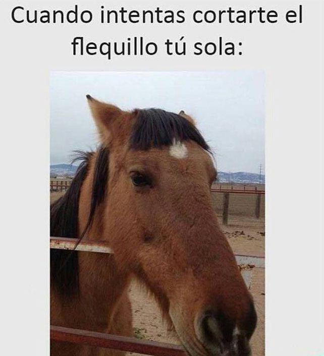 cuando intentas cortarte el flequillo tu sola caballo