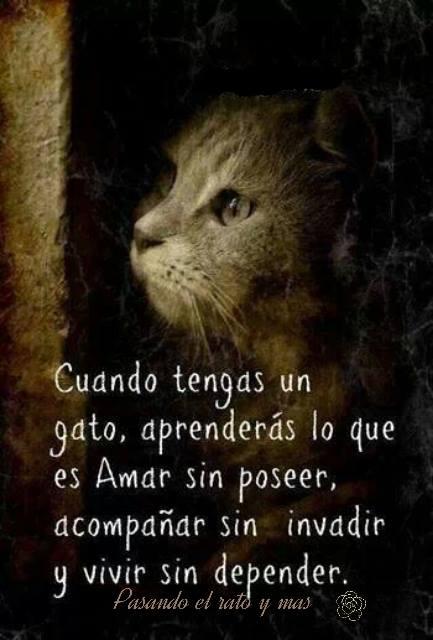 Cuando tengas un gato aprenderás lo que es amar sin poseer, acompañar sin invadir y vivir sin depender
