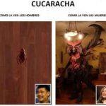 Cucaracha – Cómo la ven los hombres y cómo la ven las mujeres