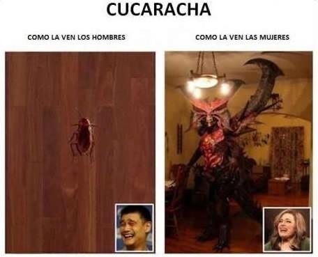 Cucaracha - Cómo la ven los hombres y cómo la ven las mujeres