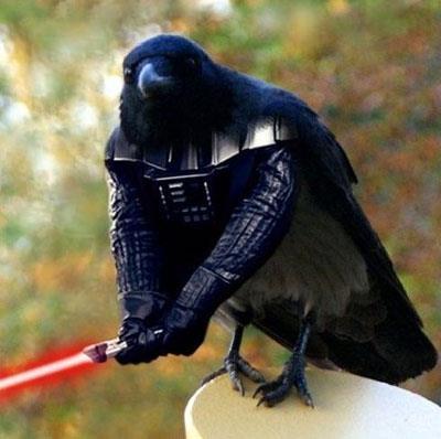 Cuervo Vader