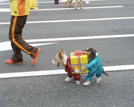 """Disfraz """"llevando un regalo"""" para perro"""