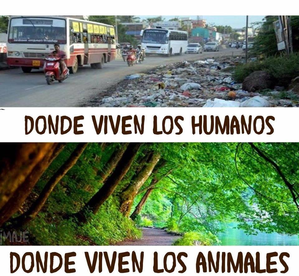 Donde viven los humanos vs donde viven los animales
