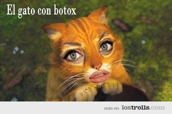 el gato con botox