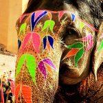 Elefante cool