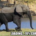 Elefante loading