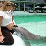 Delfín entrañable