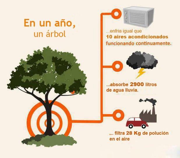 en-un-ano-un-arbol-enfria-igual-que-10-aires-acondicionados-absorbe-agua-de-lluvia-filtra-polucion