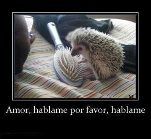 Amor, háblame por favor