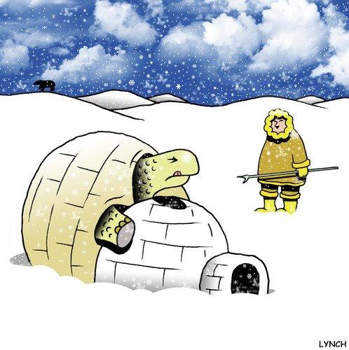 Tortuga en la nieve Fail