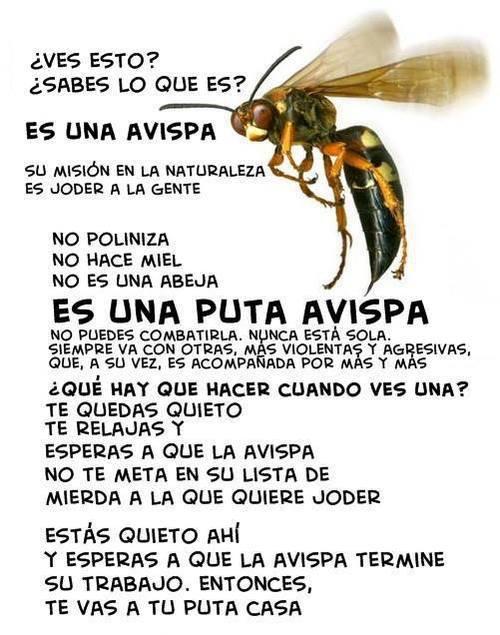 Acerca de las avispas