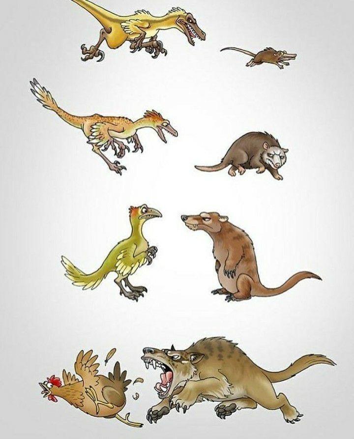 El karma de la evolución