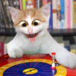 Gato flipando