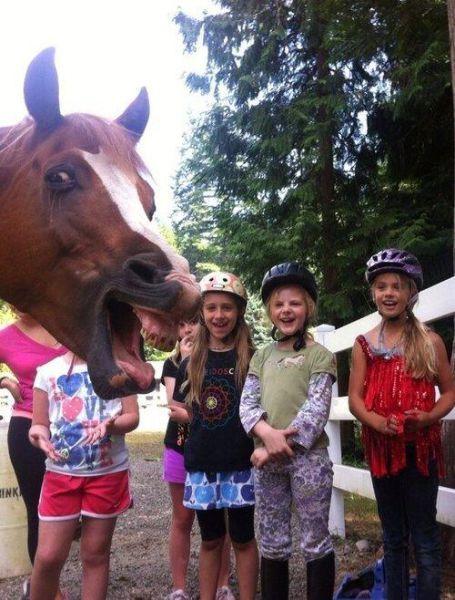 foto epica - niñas y caballo riendo
