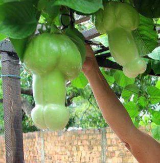 ¿Qué fruta es esta?
