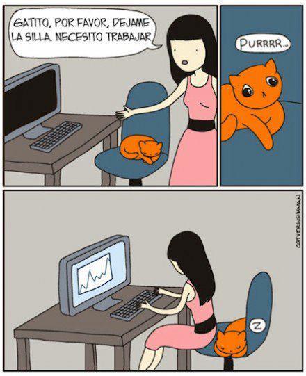 Así son los gatos