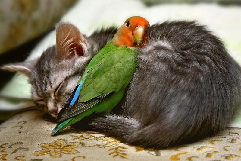 gatito y loro