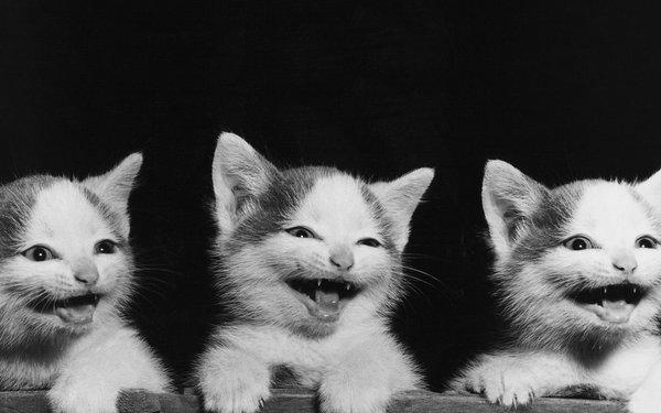 Gatitos riéndose