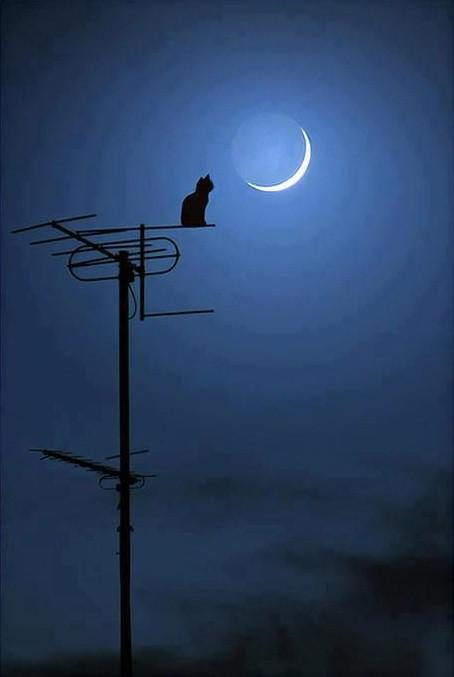 Gato mirando a la Luna