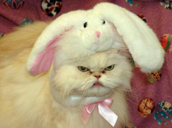 gato con gorro de conejito