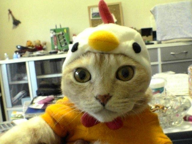 ¡Preparado para entrar en el gallinero!