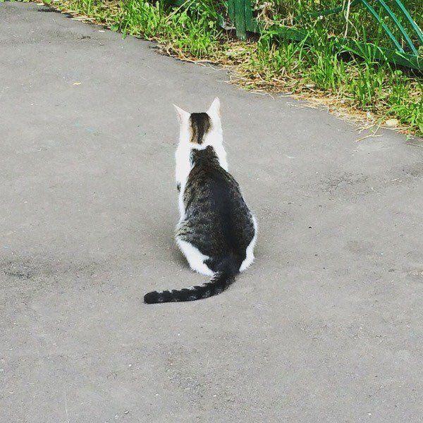 gato en gato