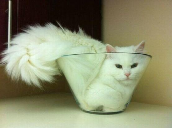 Gato encogido