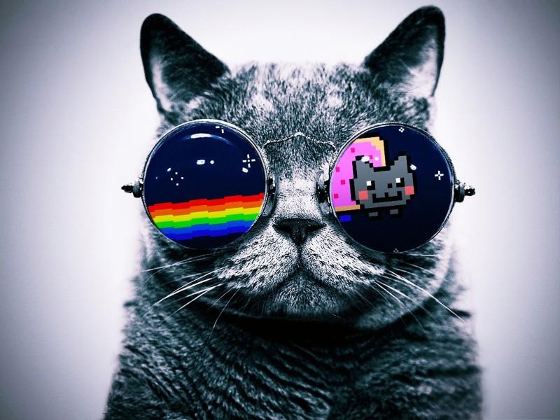 Viendo pasar a Nyan cat