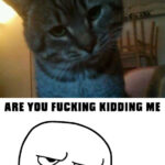 Gato Meme – Are you kidding me?