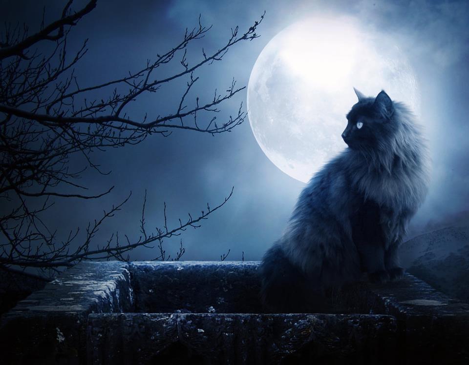 Bon dia me presento...Loca por las Lunas - Página 2 Gato-noche-luna