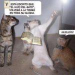 Gato predicador