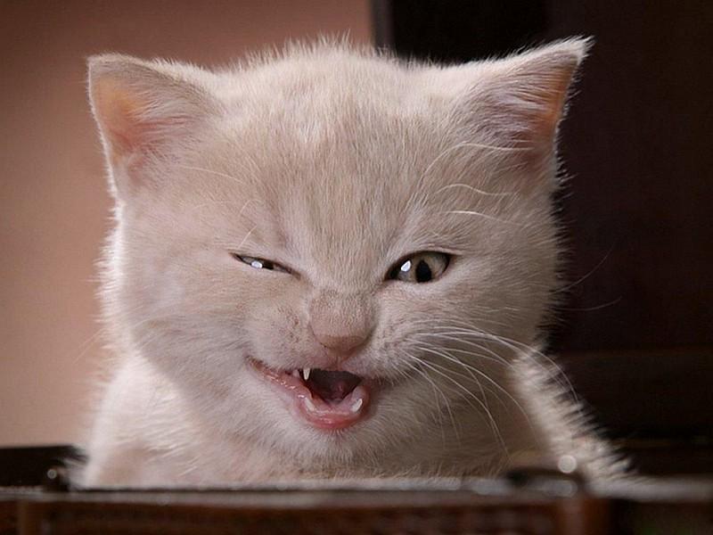 gato riendose