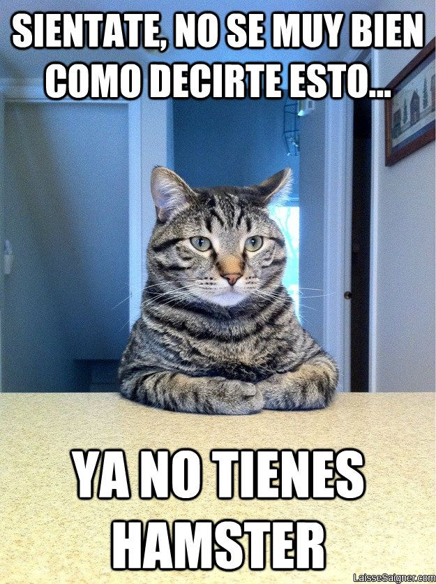 Tu gato tiene una mala noticia