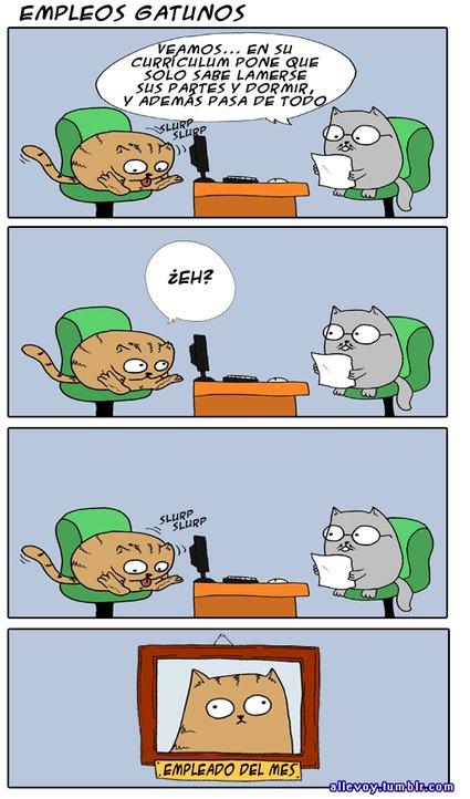 Empleos gatunos