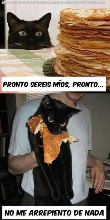 gato tortitas - pronto sereis mios, no me arrepiento de nada