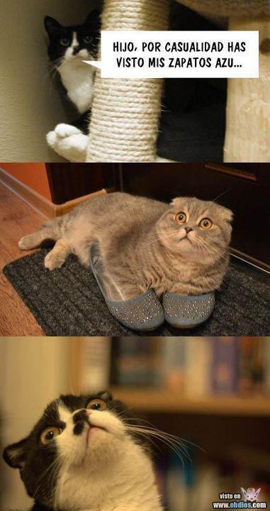 Hijo, ¿por casualidad no has visto mis zapatos azu...?