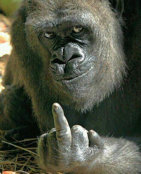 Gorila con peineta