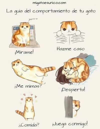 Guía del comportamiento de un gato