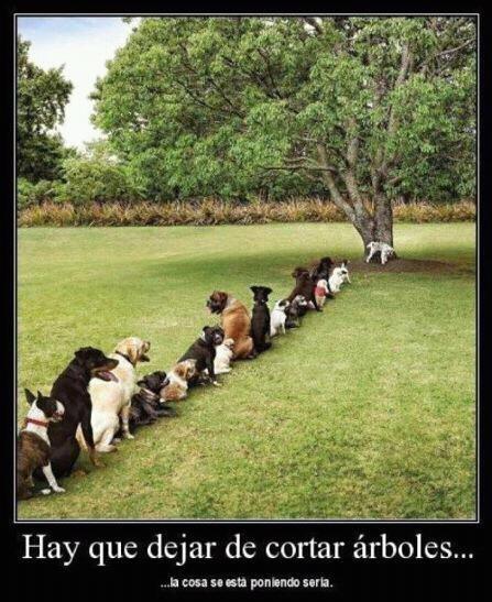Hay que dejar de talar árboles