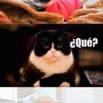 Hey gato