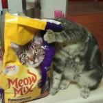 Ilusiones ópticas – Gato y bolsa de comida