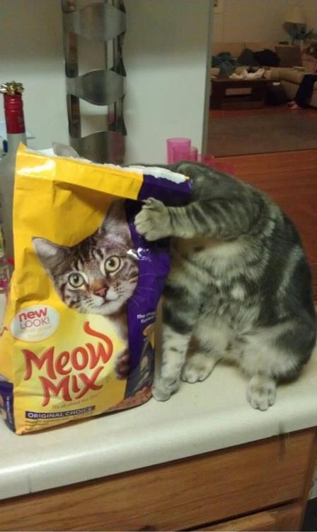 Ilusiones ópticas - Gato y bolsa de comida