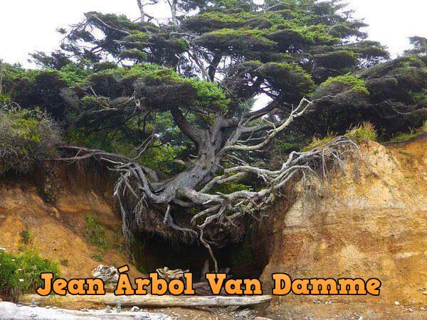 Jean Árbol Van Damme