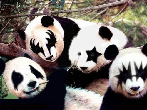 Osos panda fans de Kiss